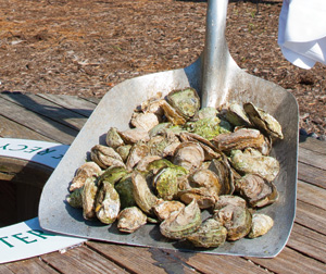 fresh roasted oysters
