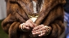 Guest holds glass of white wine at annual gourmet and grapes weekend