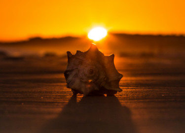 whelk at sunset